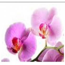 Extrait concentré de fleurs...
