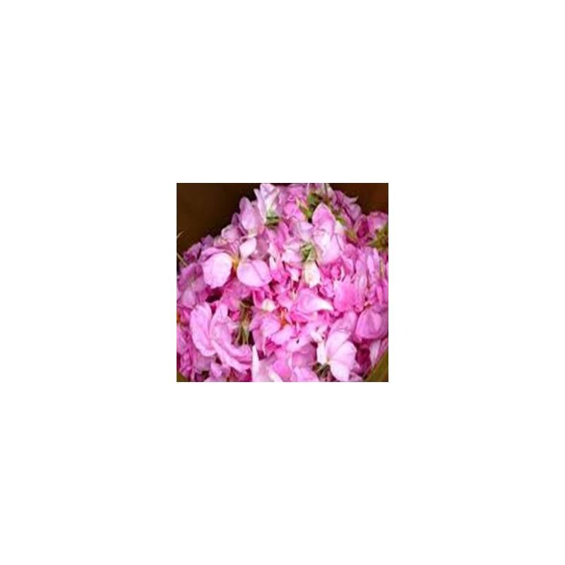 Extrait concentré de roses anciennes