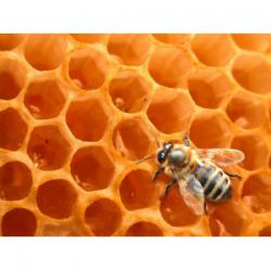 Hydrolat essentiel de miel