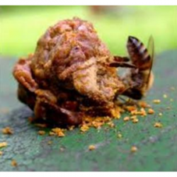 Macérat huileux de propolis
