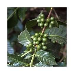 Actif végétal  de caféine...