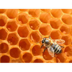 Miel de miellat de forêt noire