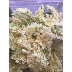 hydrolat de fleurs de sureau