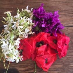 Macérat douceur de fleurs...