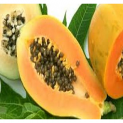 Extrait concentré de papaye